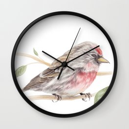Bird - Male Common Redpoll Watercolour by Magda Opoka Wall Clock