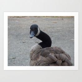 Sassy goose Art Print