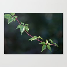Twigs & Leaves Canvas Print