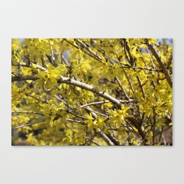 Spring Blooming Canvas Print