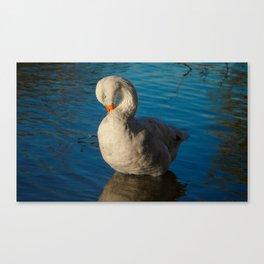 Sleepy Goose Canvas Print