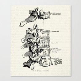 Vintage Anatomy Illustration of the Thoracic vertebrae Canvas Print
