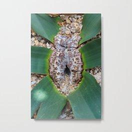 Welwitschia Metal Print