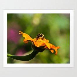 Balancing Bumblebee Art Print