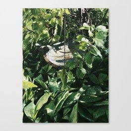Garden in summer Canvas Print