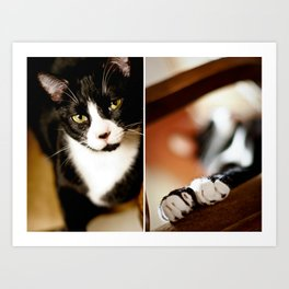Cat and Paws Collage Art Print
