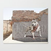 pitbull Canvas Prints featuring Pitbull by Anton DSC