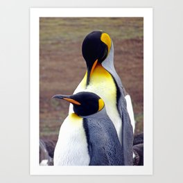 Male and Female King Penguins Art Print
