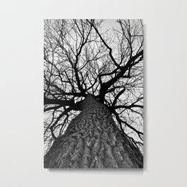 Giant Cottonwood Tree in Winter Metal Print