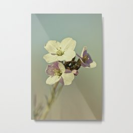 Cuckoo Flower 2 Metal Print