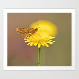 Orange butterfly feeding on yellow flower Art Print