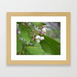 White Berries Framed Art Print