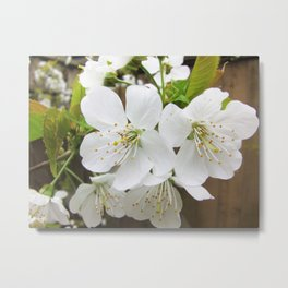 Snow White Metal Print