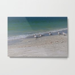 Dolphin Watching on Lover's Key Metal Print