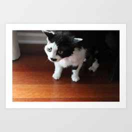 Overly Photogenic Cat, take 2 Art Print