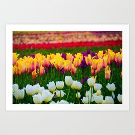 Fields of Color III, Woodburn Tulip Festival Art Print