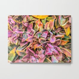 green and pink succulent plant garden texture background Metal Print