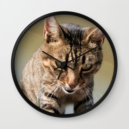 Tabby Cat Looking Down From A Height  Wall Clock