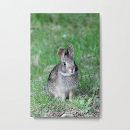 Bunny 2 Metal Print