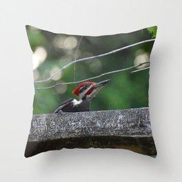 Pileated Wood Pecker Throw Pillow