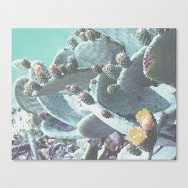 Green Flowering Cacti Canvas Print