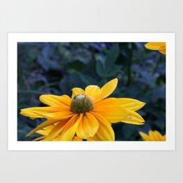 Sunny Praire Sun - Flower Art Print