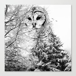 Winter Owl Canvas Print