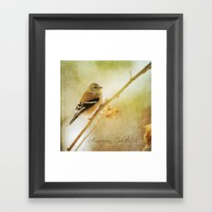 American Gold Finch Framed Art Print