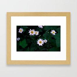 Shadowy Daisies Framed Art Print