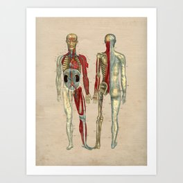 Human Artery Anatomy 1841 Print Art Print