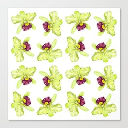 Cattleya Orchids Canvas Print