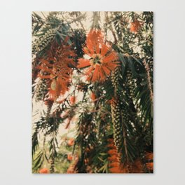 Winter Mood Florals Photography Canvas Print