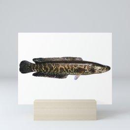 Northern Snakehead Mini Art Print