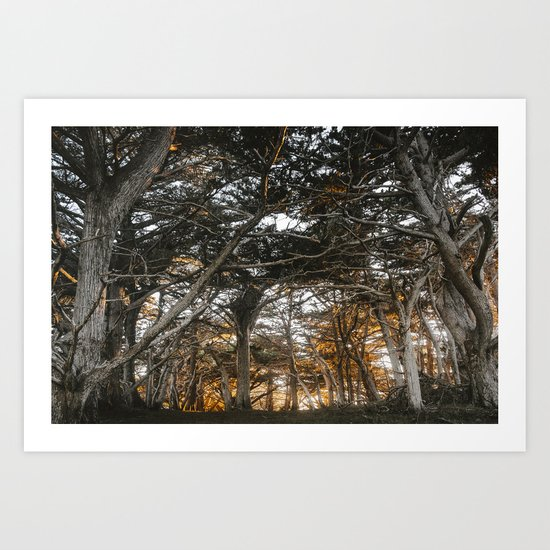 Golden Light Through The Trees Art Print