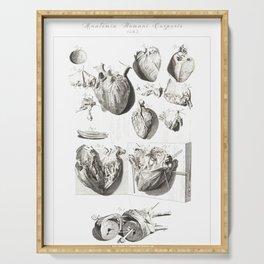 Human Anatomy Art Print HEART ATRIUM VENTRICLE Vintage Anatomy, doctor medical art, Antique Book Pla Serving Tray