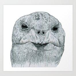 Cranky Galapagos Tortoise Art Print