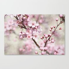 Cherry Blossom Tree Flowers Canvas Print