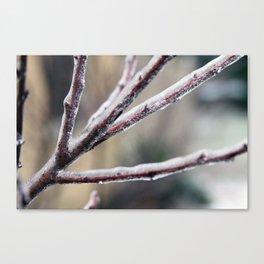 Ice Shield Canvas Print