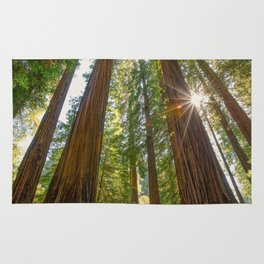 Majestic California Redwoods Rug