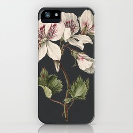 M. de Gijselaar - Pelargonium album bicolor (1830) iPhone Case