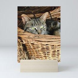 Basket Kitty (Lanai Cat Sanctuary) Mini Art Print