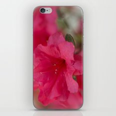 Pink Azalea  iPhone & iPod Skin