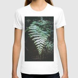 Fern Leaf on 35mm Film. Analog Nature Photography. Schwarzwald, Germany. European Travel Print. Wall Art. T-shirt