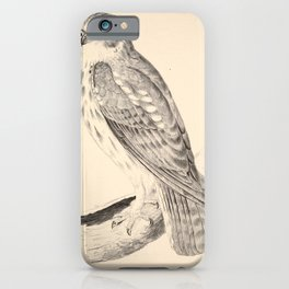 Vintage Print - Companion to Gould's Birds of Australia (1877) - Boobook Owl iPhone Case