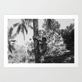 Climbing palm tree Art Print