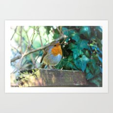 Curious Robin Art Print
