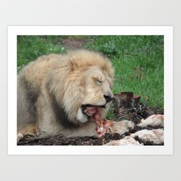 Feeding Time...  Art Print