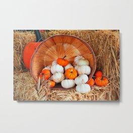 White And Orange Mini Pumpkins Metal Print