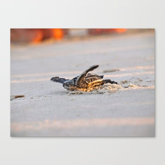 Leatherback Canvas Print