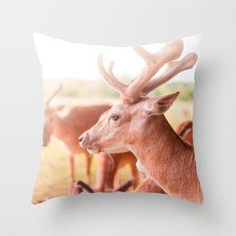 deer sunshine Throw Pillow